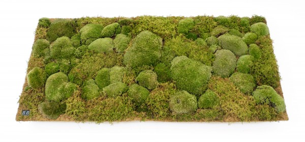 "2.)  Disposable/recyclable coco mat ""Moss Cartridge"""