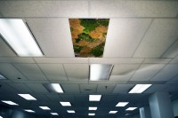 green_ceiling_01