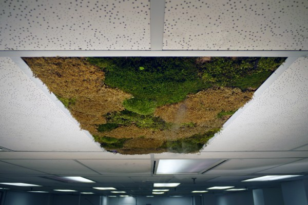 green_ceiling_03